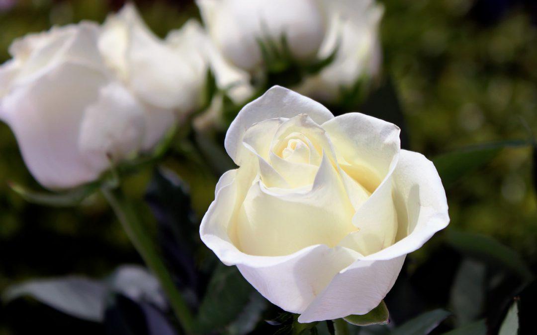 Pogrzeb świecki – co warto o nim wiedzieć?